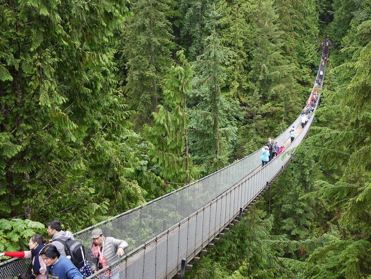 Tourists look into the forest on the Capilano Suspension Bridge, Vancouver