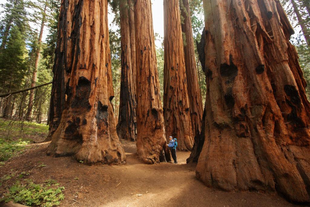 Tourists walking through Sequoia National Park.