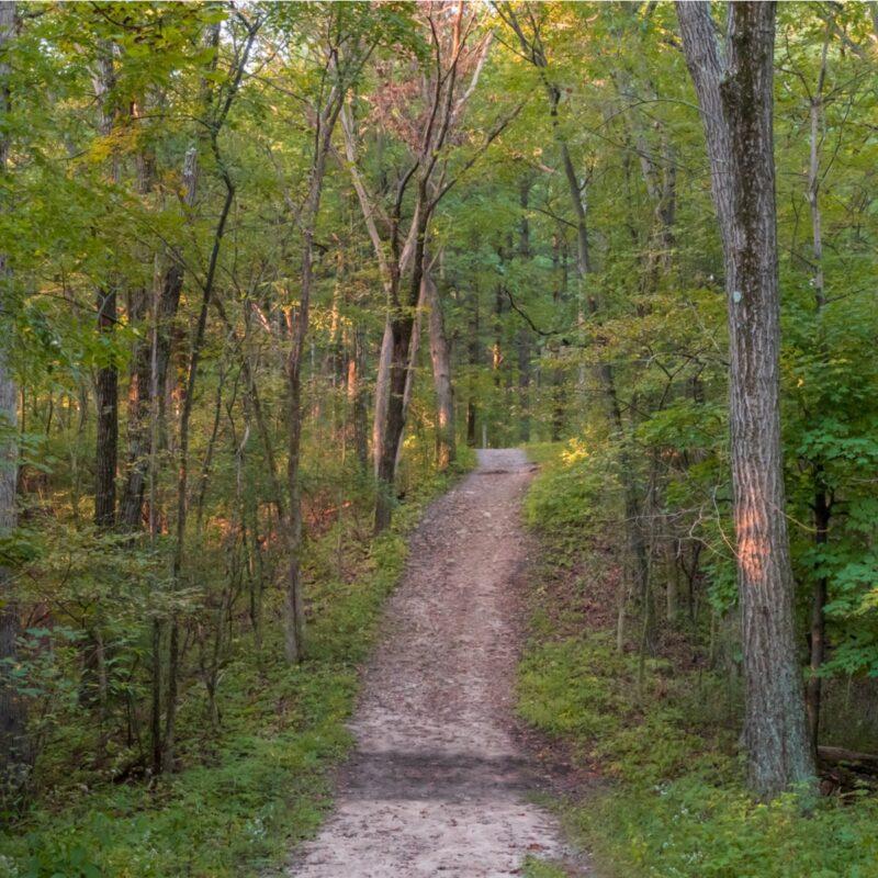 Trail In Wisconsin.