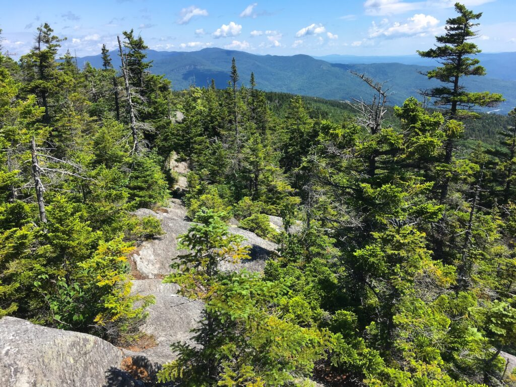 Trail views in Camel's Hump State Park.