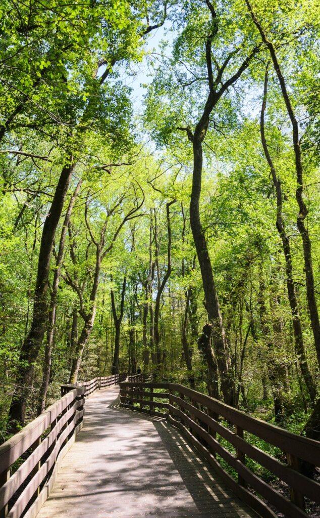 Trap Pond State Park in Delaware.