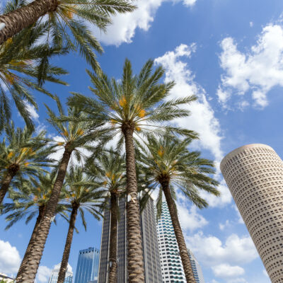 Trees and buildings, Tampa, Florida.