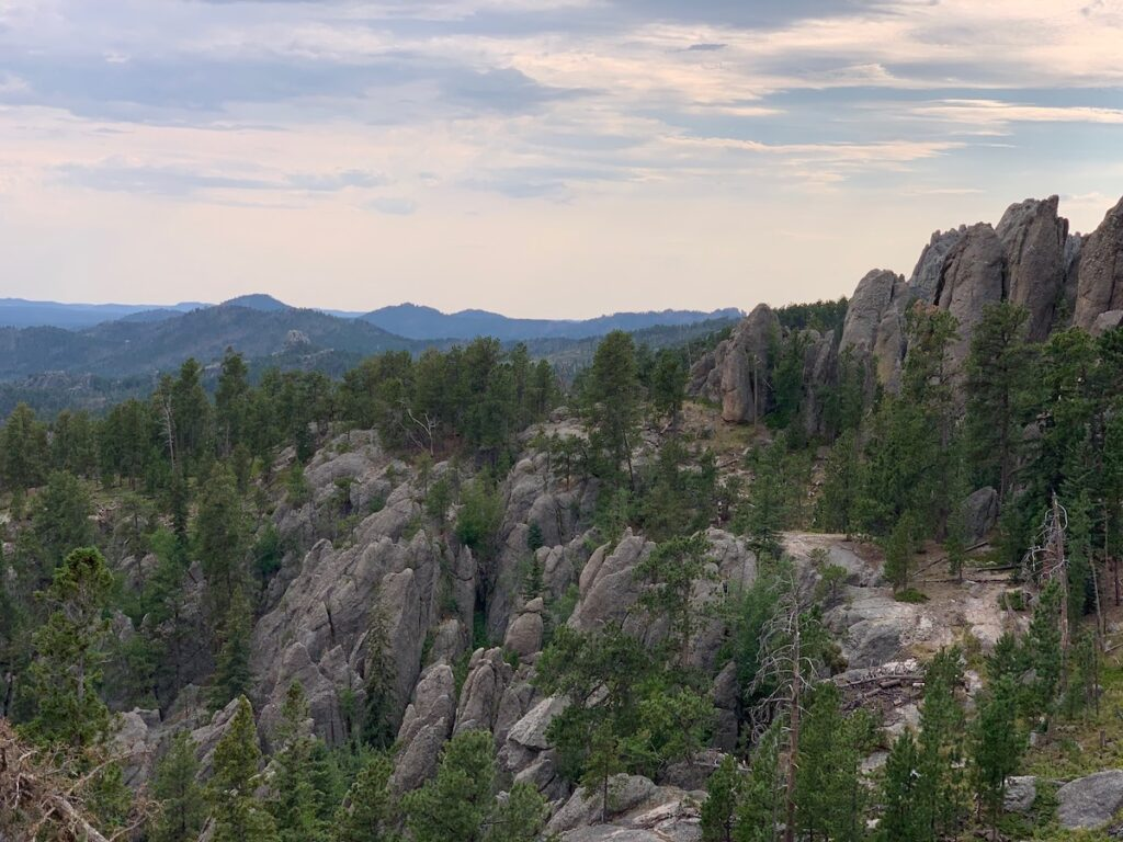 Trees and rocks in Custer State Park.