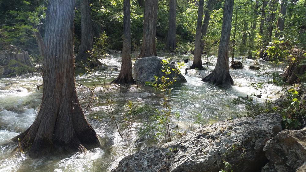 trees at hamilton pool