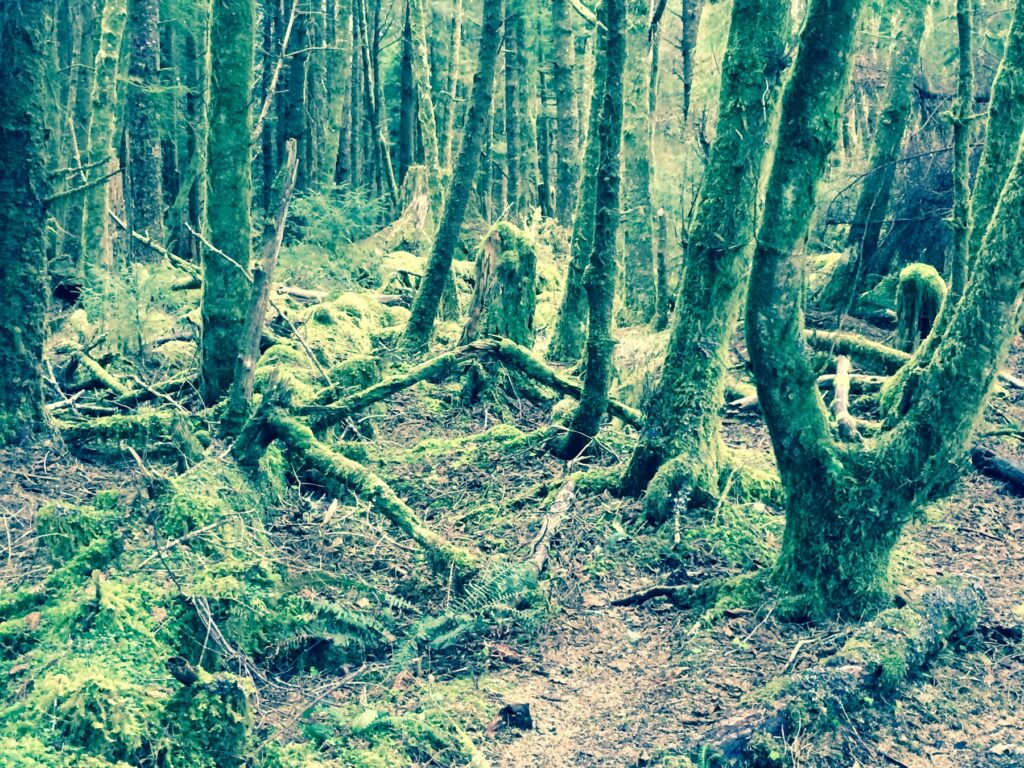 Trees covered in moss along the Tillamook Head Trail.