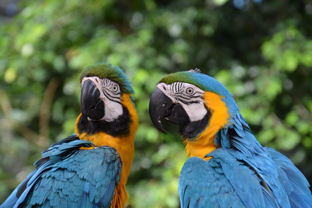 Tropical birds at Birdworld in Kuranda.