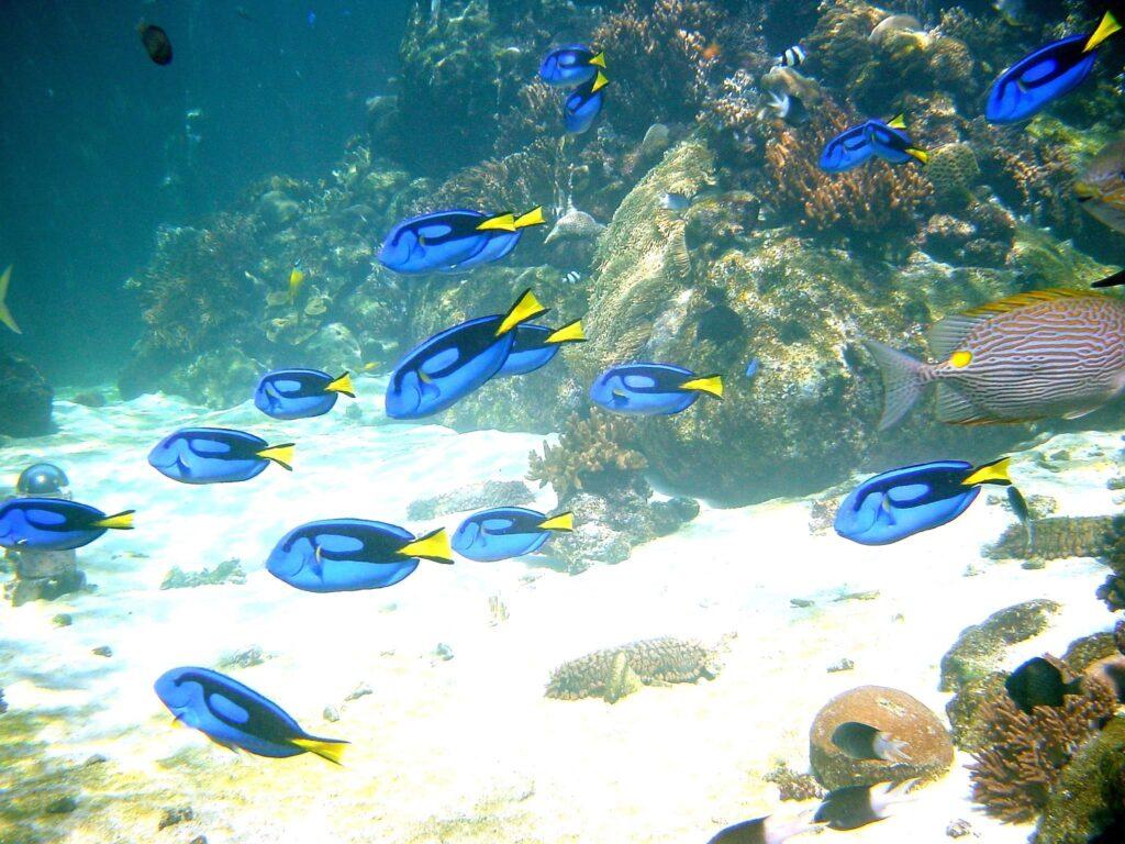 Tropical fish at Reef HQ, the Townsville aquarium.