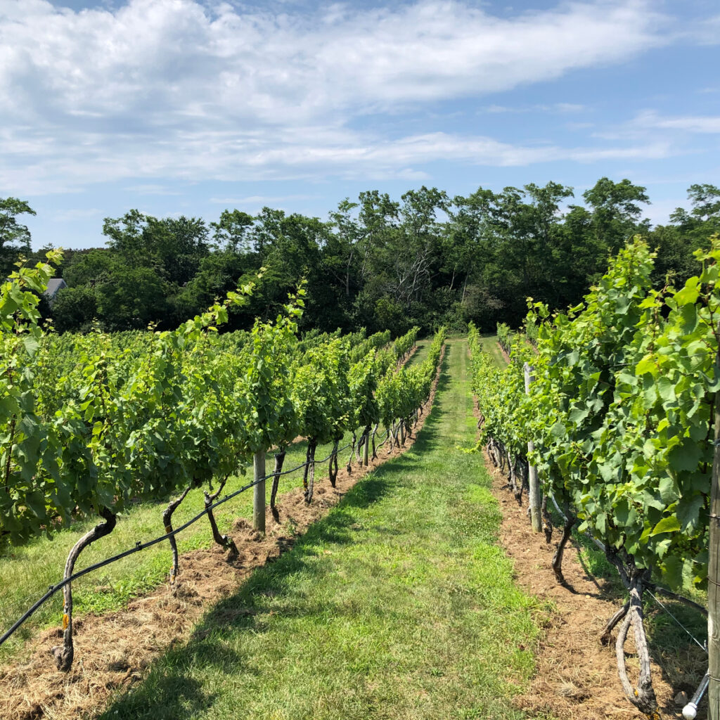 Truro Vineyards and South Hallow Spirits in Cape Cod.