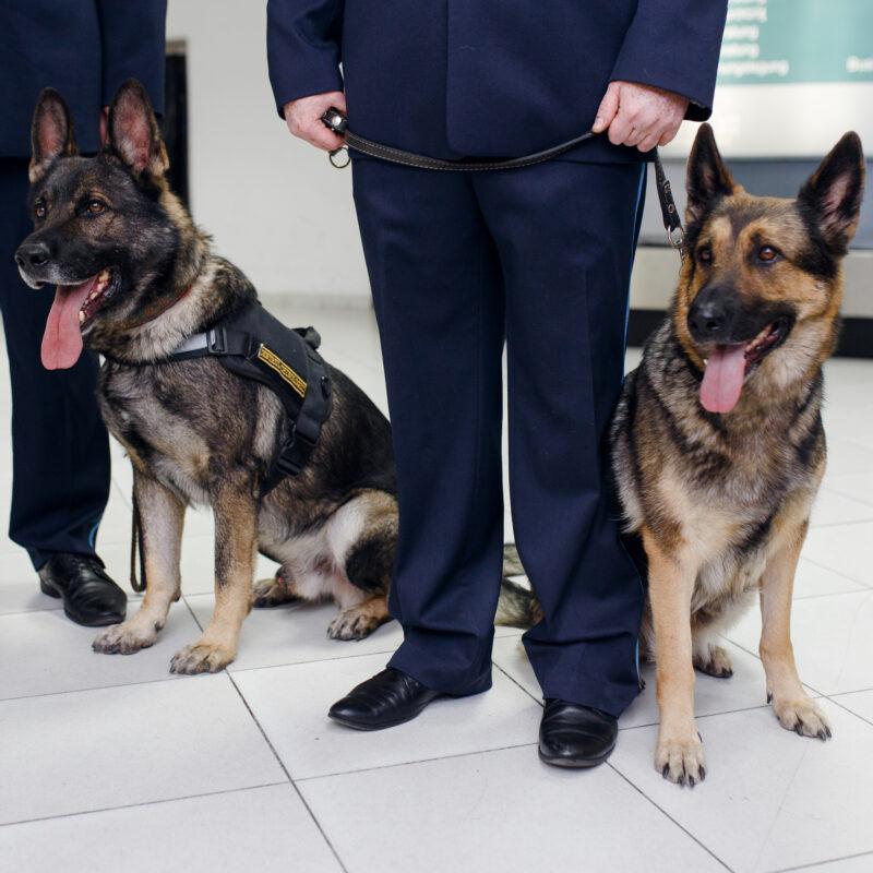 TSA dogs at an airport.