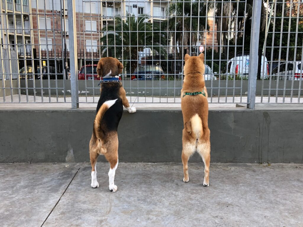 Two dogs at a park in Buenos Aires, Argentina.