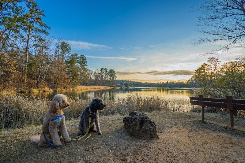Two dogs lakeside at a Piney Woods, Texas, campground