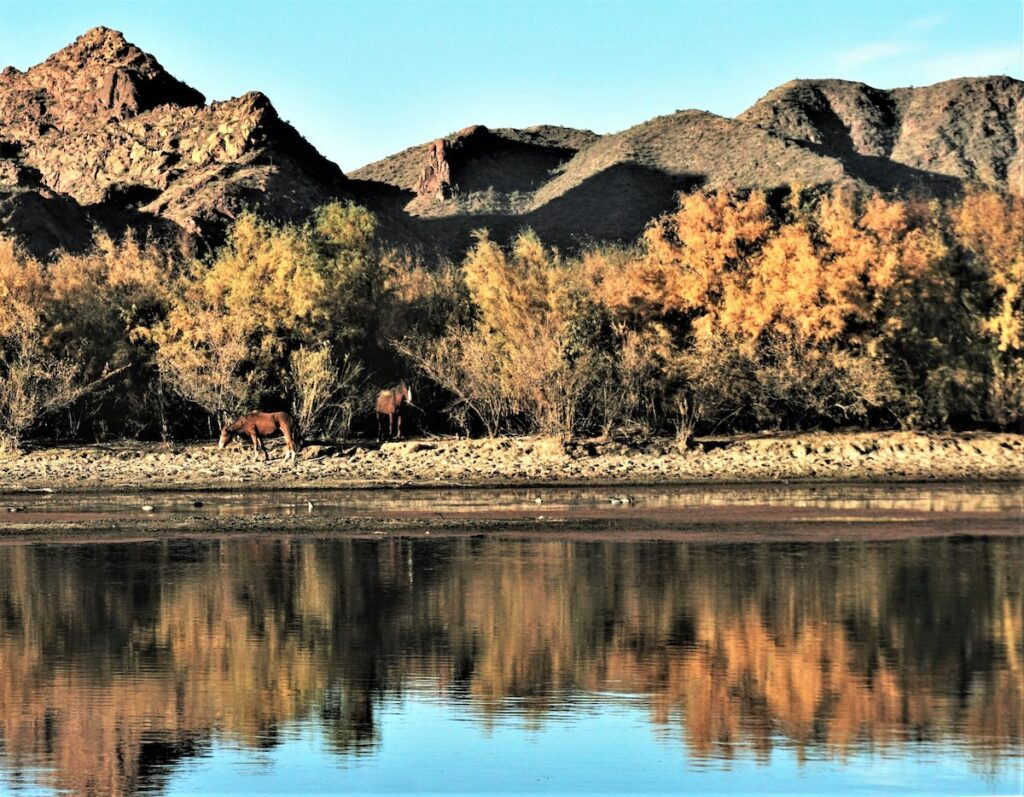 Two horses in Salt River Valley.