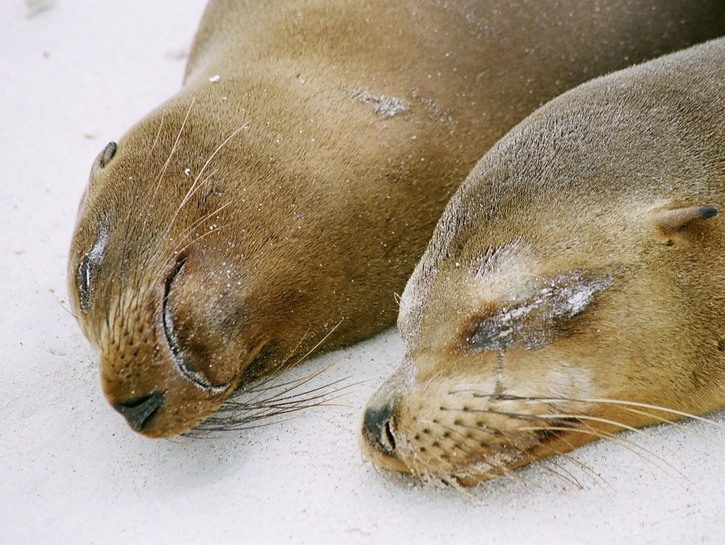 Two seals nap in the sand.