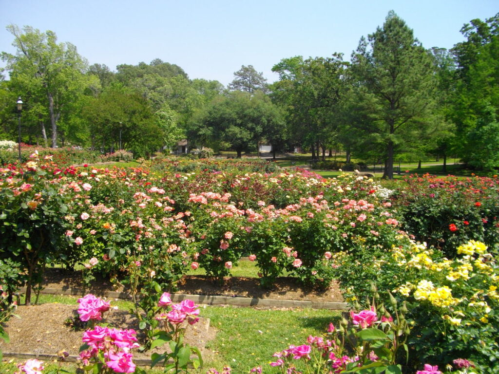 Tyler Rose Garden in Tyler, Texas.