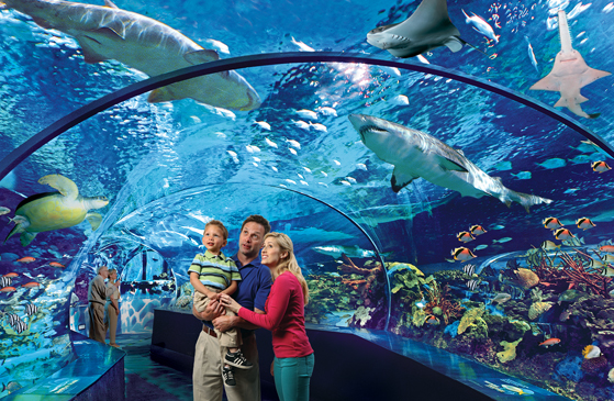 Underwater tunnel Ripley's Aquarium of the Smokies, Gatlinburg