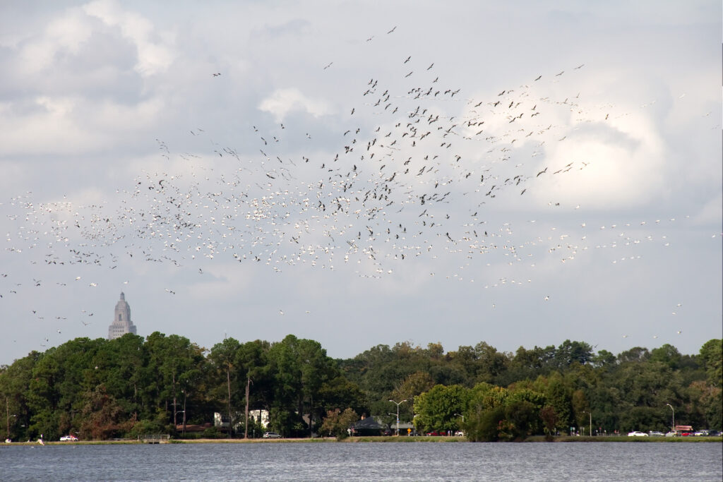 University Lake in Baton Rouge, Louisiana.