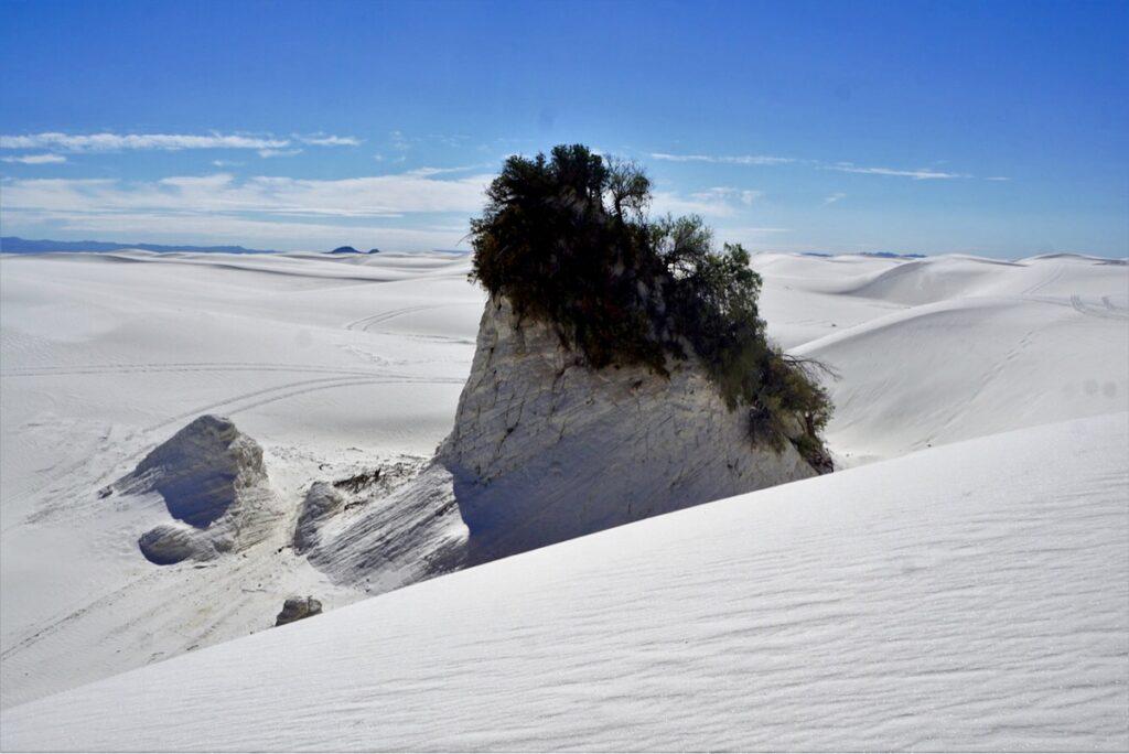 Vegetation on the dunes at White Sands.