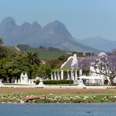 Vergenoegd Low vineyard in South Africa.