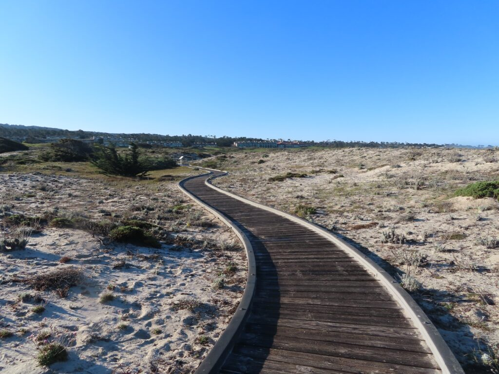 View from the beach towards Asilomar Conference Grounds.