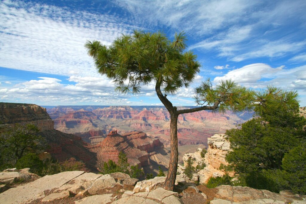 View from the Grand Canyon's south rim.