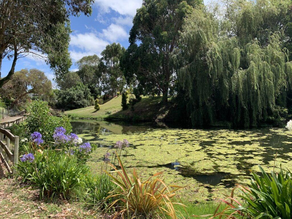 View of nature preserve in Whanganui.