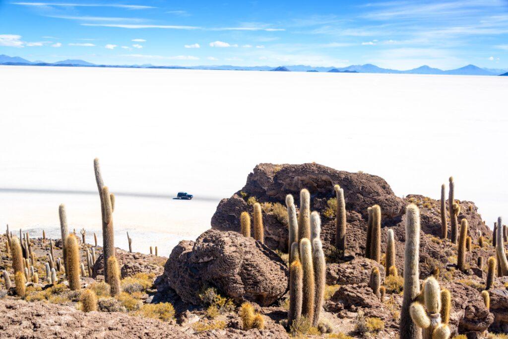 View of Salar De Uyuni from Isla Incahuasi.