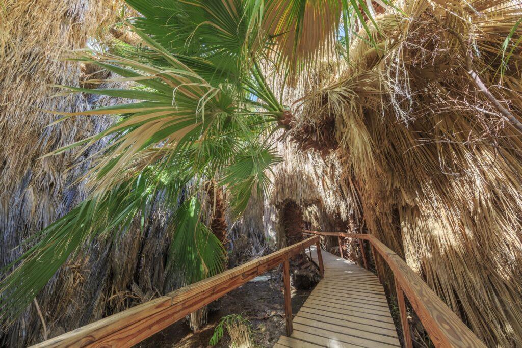 View of the Coachella Valley Preserve.