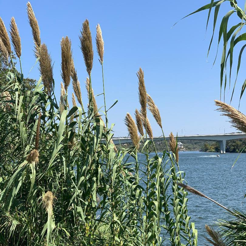 Views along the banks of Lake Marble Falls.