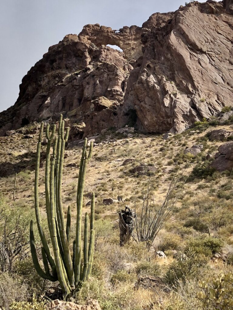 Views along the Double Arches Trail at Organ Pipe Cactus National Monument.
