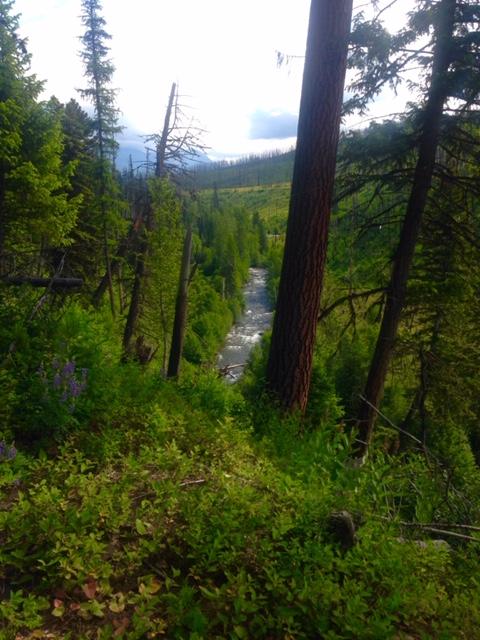 Views along the Quartz Lake Loop trail.