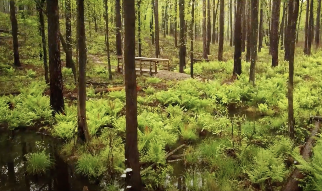 Views along the Wild Azalea Trail in Kisatchie National Forest.