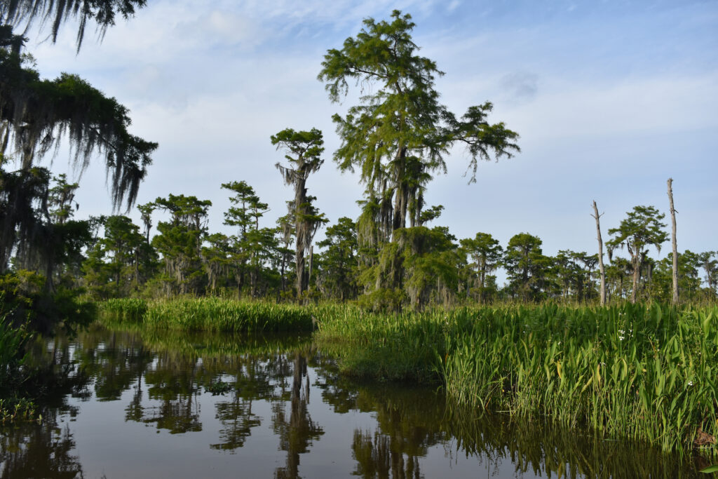 Views from a trail in the Barataria Preserve in Louisiana.