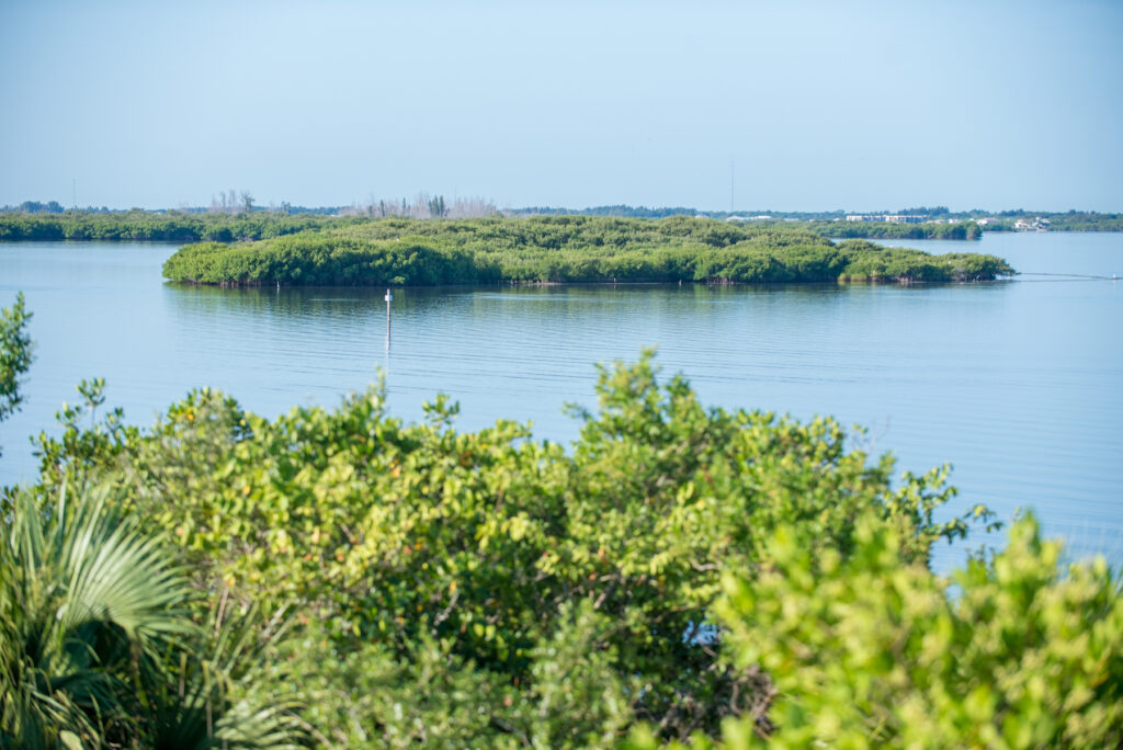 Views from the Avalon Nature Trail in Florida.