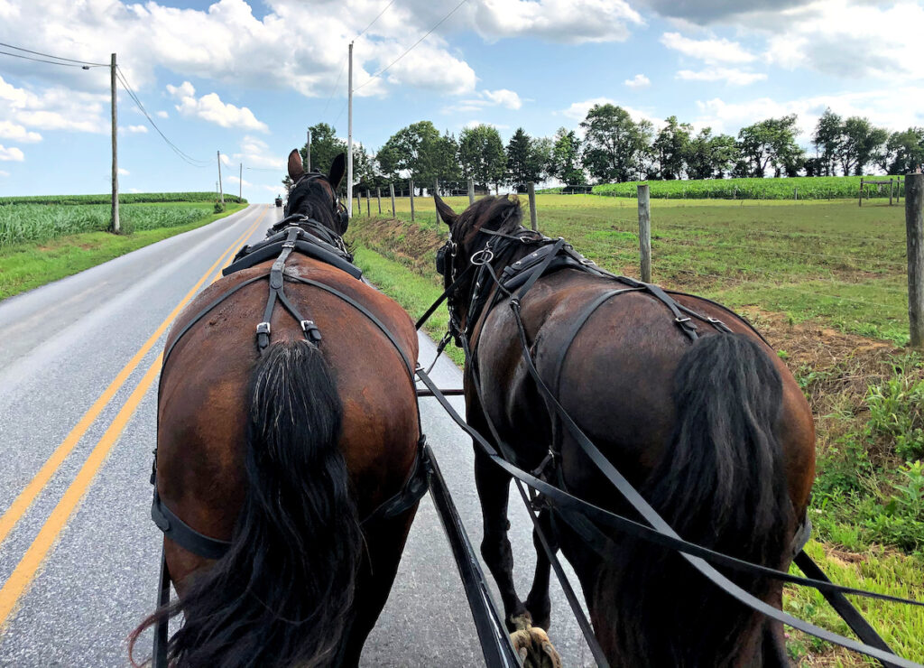 Views from the buggy during the ride.