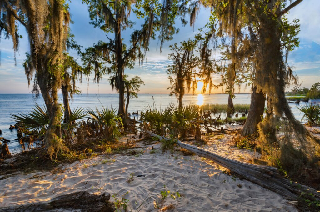 Views from the Cane Bayou Trail in Fontainebleau State Park.