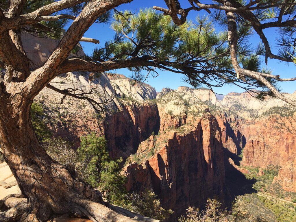 Views from the top of Angel's Landing.