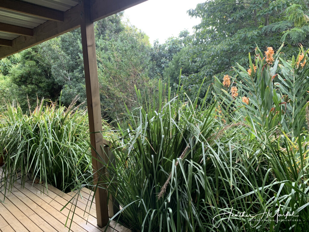 Views from the writer's porch in New Zealand.