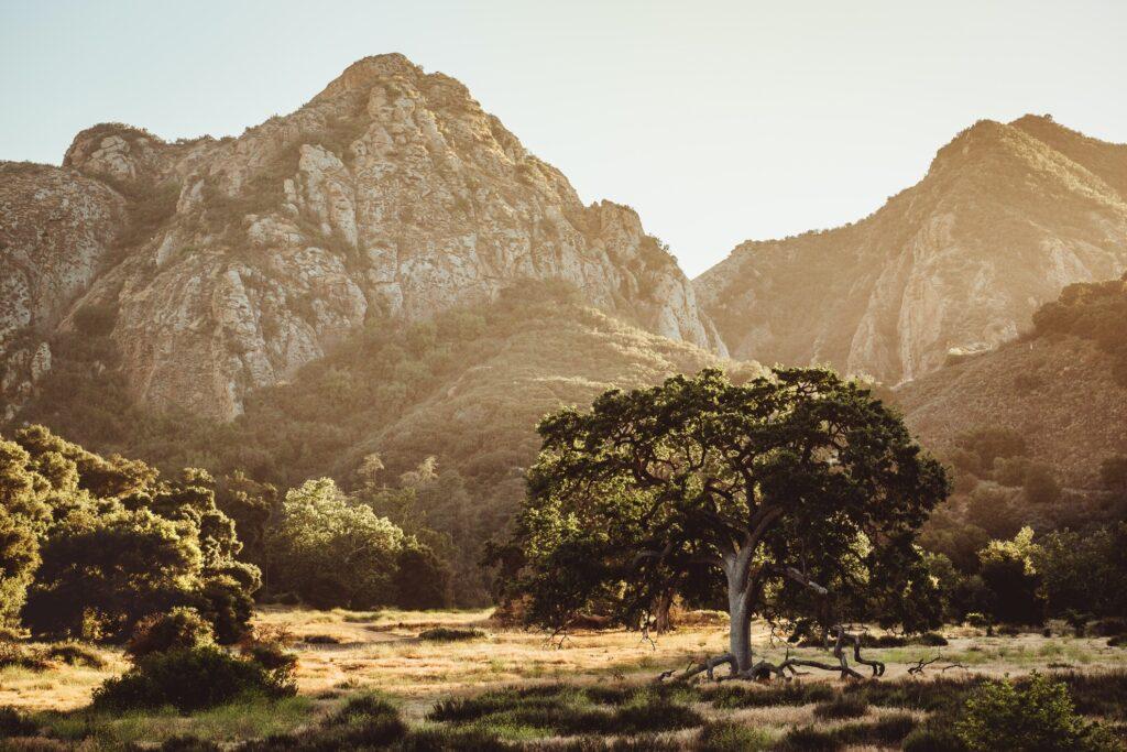 Views in Malibu Creek State Park.