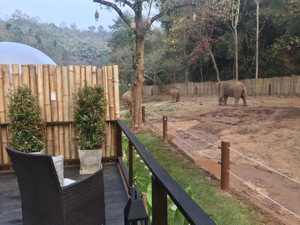 Views of the elephants from the jungle bubble.
