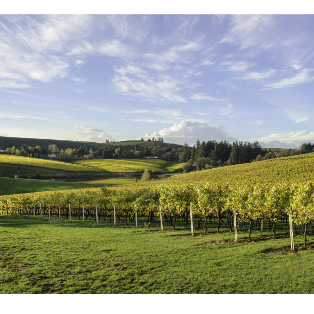 Vineyard in Oregan.