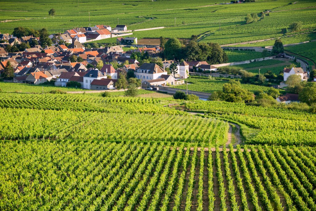 Vineyard views in Beaune, an area in the Burgundy region of France.