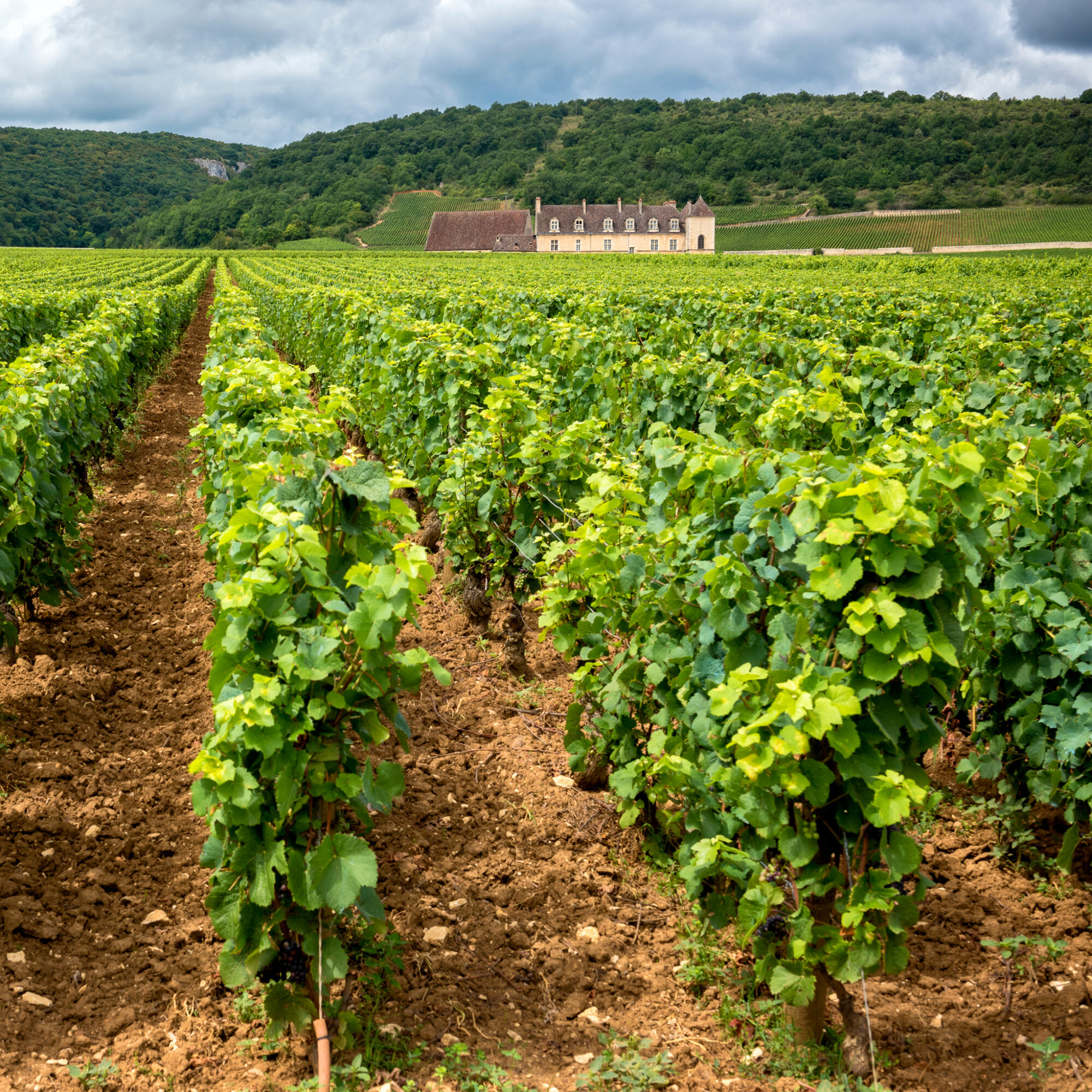 Vineyard views in Burgundy, France.