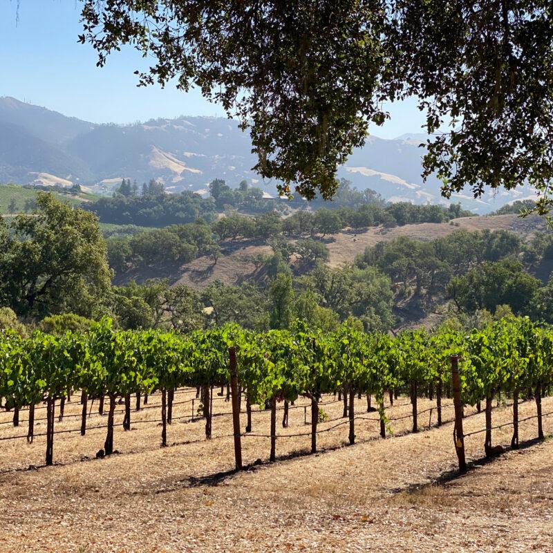 Vineyard views in California's Sonoma County.