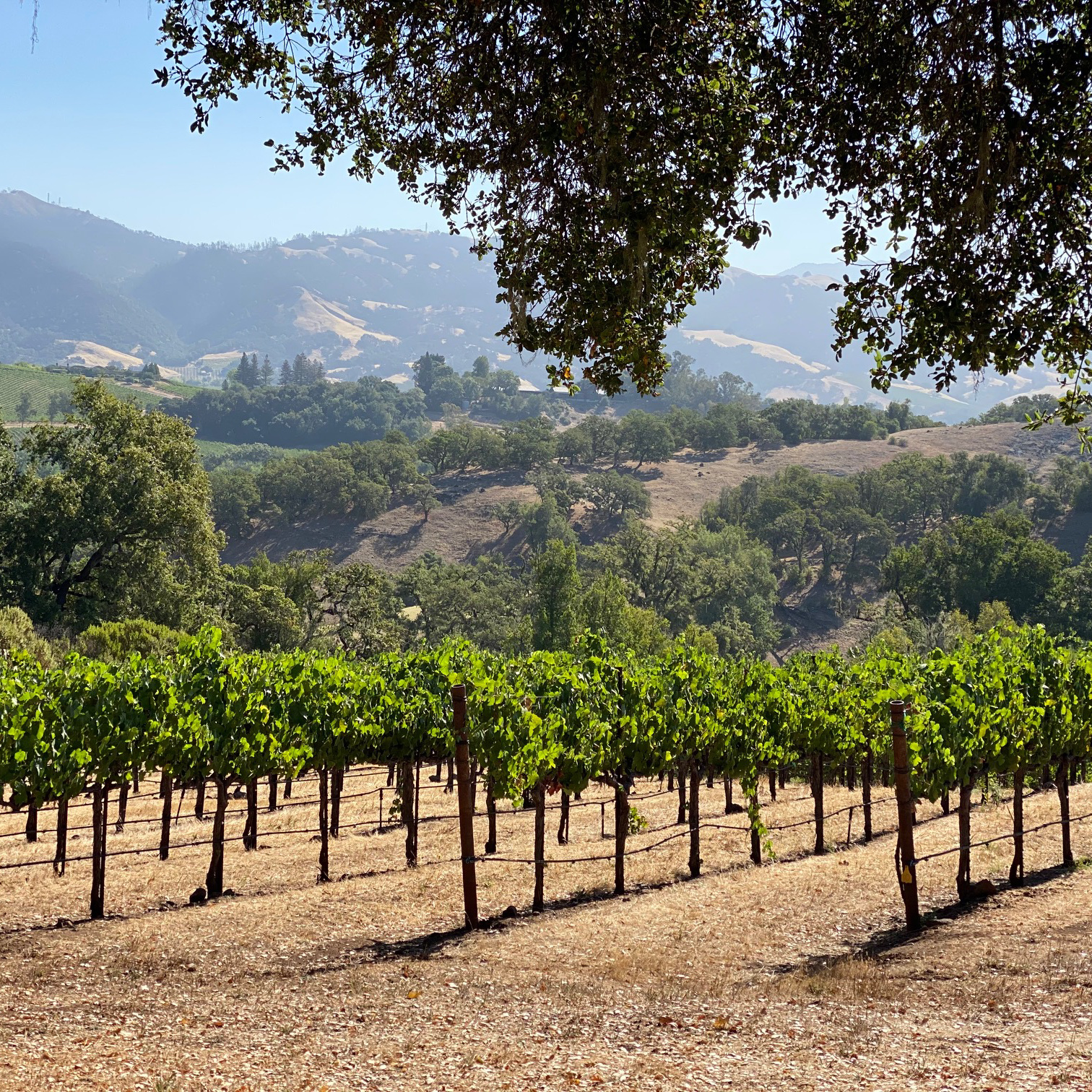 Vineyard views in California's Sonoma County.