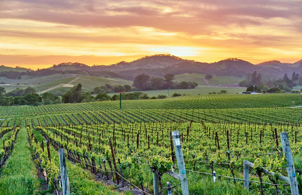 Vineyard views in Napa Valley, California.