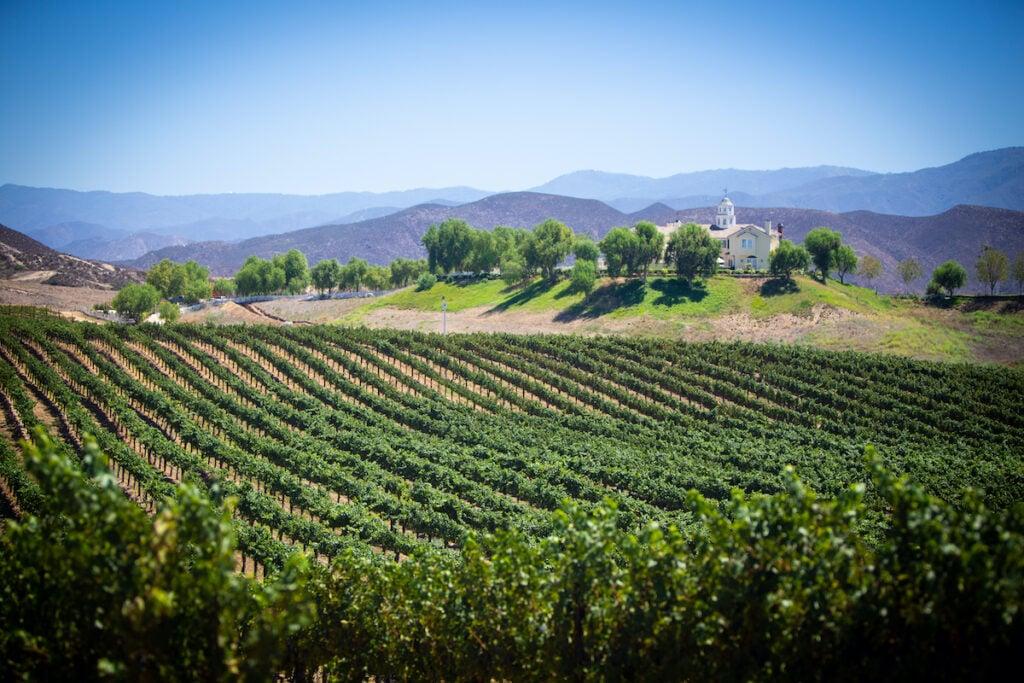 Vineyard views in Temecula, California.
