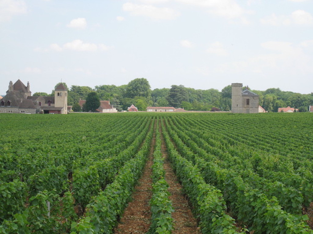 Vineyards in Burgundy, France.
