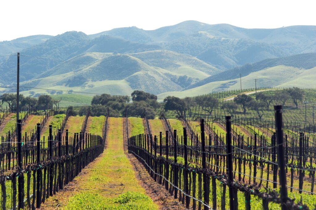 Vineyards in Paso Robles, California.