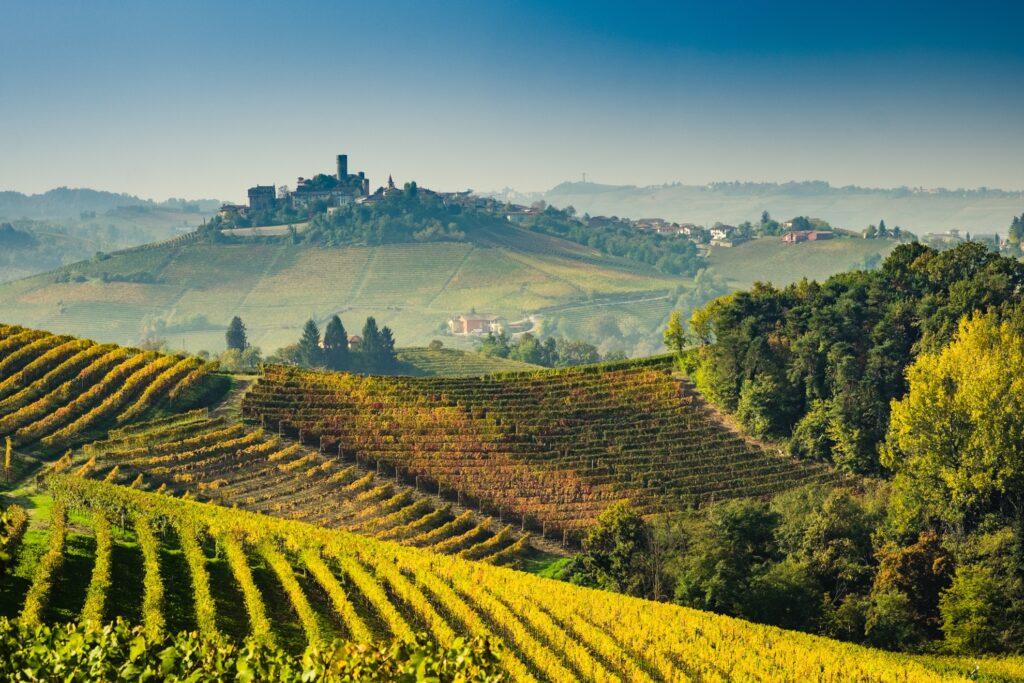 Vineyards in Piedmont, Italy.