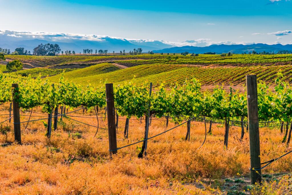 Vineyards in Temecula, California.